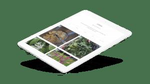 Hambledon Gallery web development